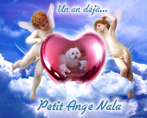 Nala...notre Ange...