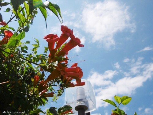 Une nouvelle balade fleurie le 9 juillet (suite)....