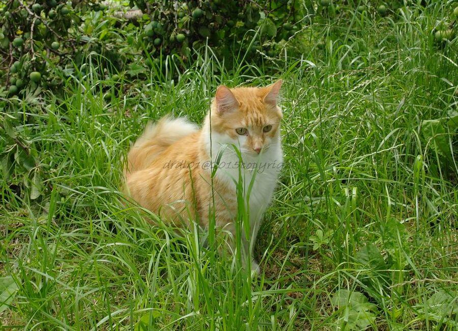 Olivier euphorisant pour le chat