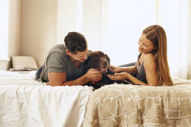 """Un congé de """"patte-ternité"""", pour prendre soin de son animal de compagnie"""