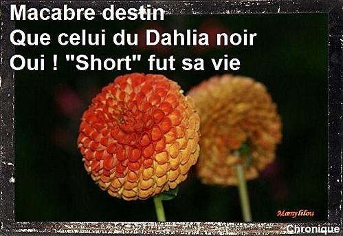 Dahlia-4.jpg