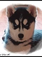 Saïka (2 mois)