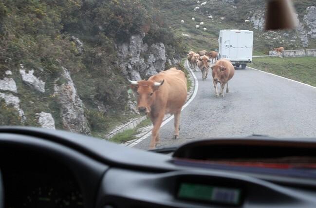 5 Sur la route du lac de Covadonga (51)