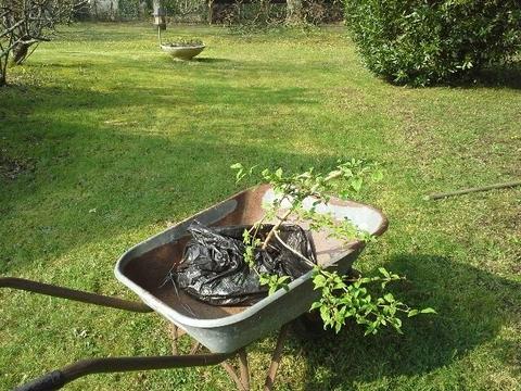 Au jardin, avec les oiseaux mais surtout... le sécateur et la pelle !