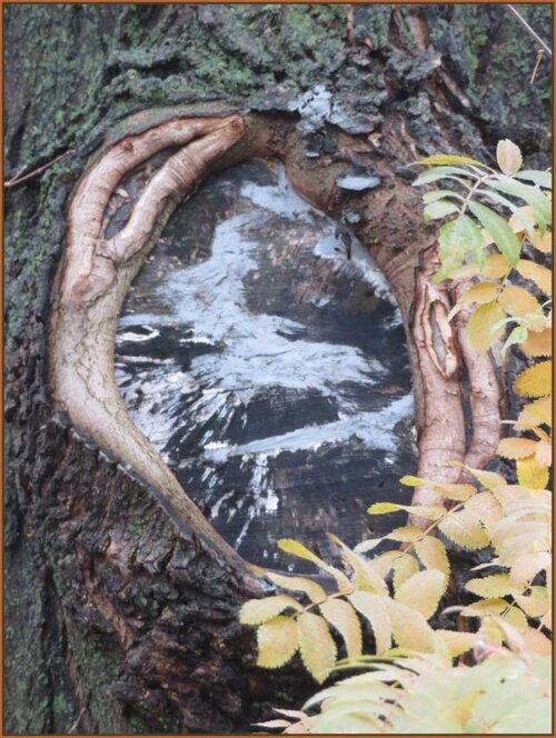 ...dans un tronc d'arbre...