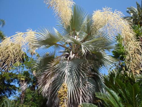 Jardin botanique HANBURY - La Mortola.