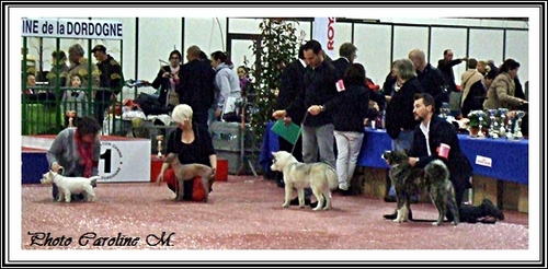 Exposition de Périgueux (12 mars 2016)