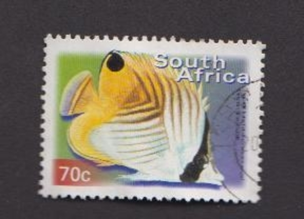 Threadfin butterflyfish ou poisson papillon jaune - Afrique du sud