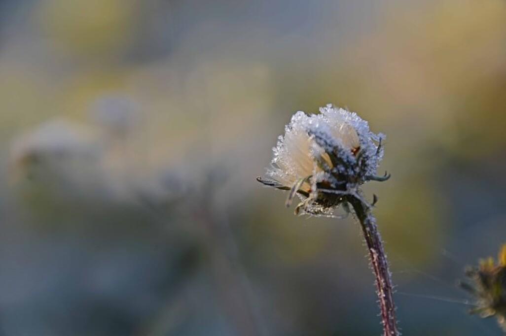 Givre-neige-6-3114_modifie-2.jpg