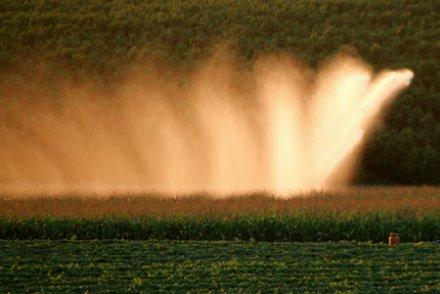 Le maïs est-il économe en eau (à Sivens et ailleurs) ?