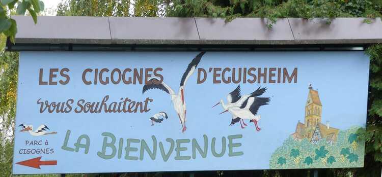 Cigognes d'Eguisheim.