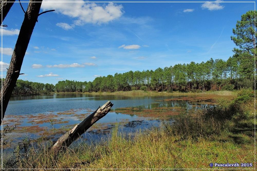 L'étang de Surgenne - Septembre 2015 - 1/10