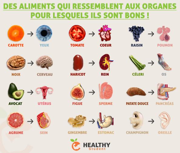 """Résultat de recherche d'images pour """"aliment qui ressemble aux organes"""""""