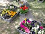 Vente de fleurs 2014