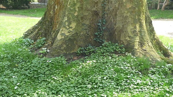 Jardins Albert Kahn 092