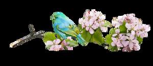 BARRE DE SEPARATION OISEAU BIRD DIVIDER