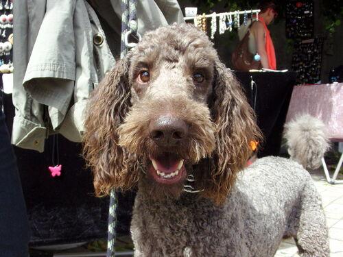 une fête des artistes à Amboise qui avait du chien !