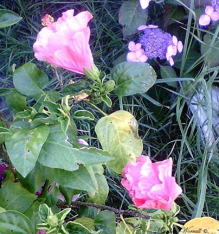 Ingersheim : Une plante qui refuse de mourir