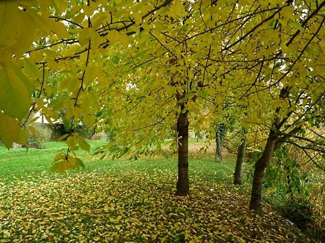Metz en automne 21 Marc de Metz 2011
