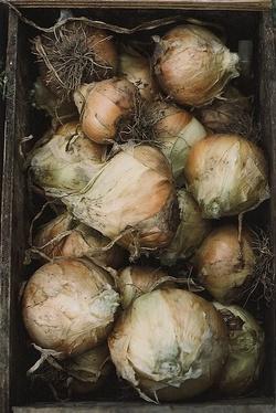 Observations sur quelques légumes