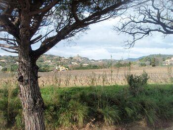 La plaine viticole de Grimaud