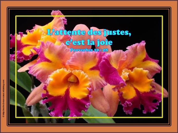 L'attente des justes, c'est la joie - Proverbes 10 : 28
