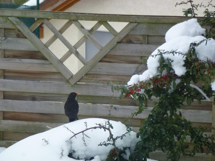 Les oiseaux dans la neige