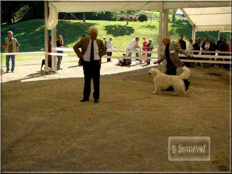 Exposition canine Mont-de-Marsan CACIB, 14 juin 2008