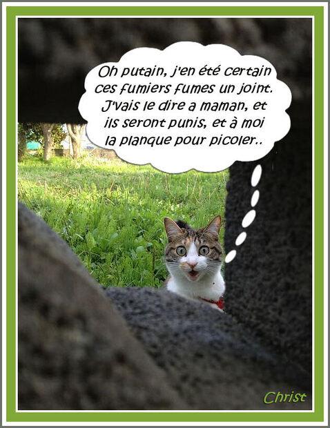 Chats chez des débauchés....