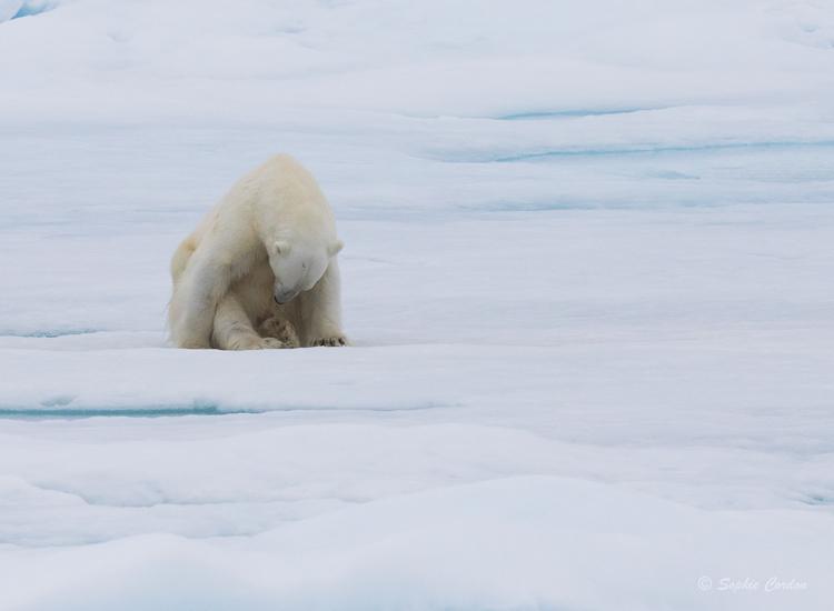 Revenons à notre ours du 7 août