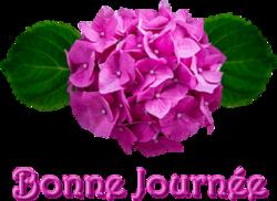 Pluie de fleurs d'Hortensia