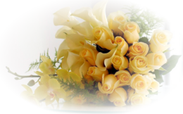 fleurs misted