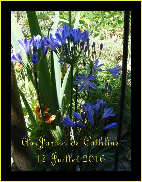 Jardiner avec La Lune du 21 au 31 Juillet