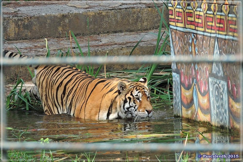 Zoo du Bassin d'Arcachon à La Teste - Août 2015 - 6/11