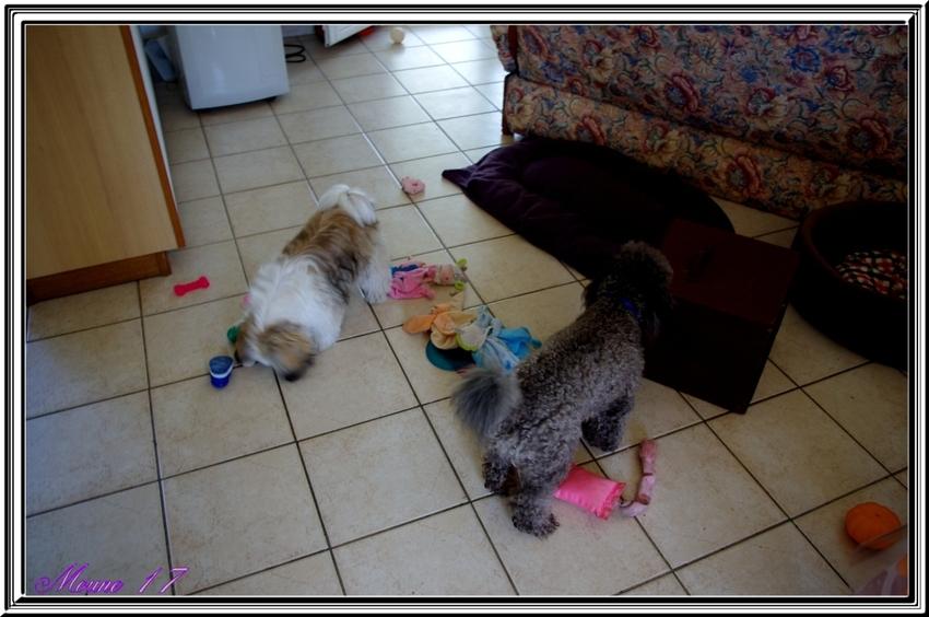 Les jouets........... avec Falcon et Hermione