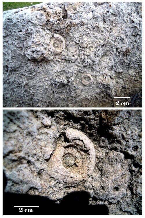 Gastéropodes de pierre