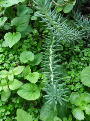 Mini scènes, mini jardin