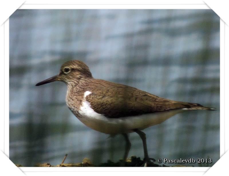 Symphonie printanière à la réserve ornithologique du Teich - 10/20