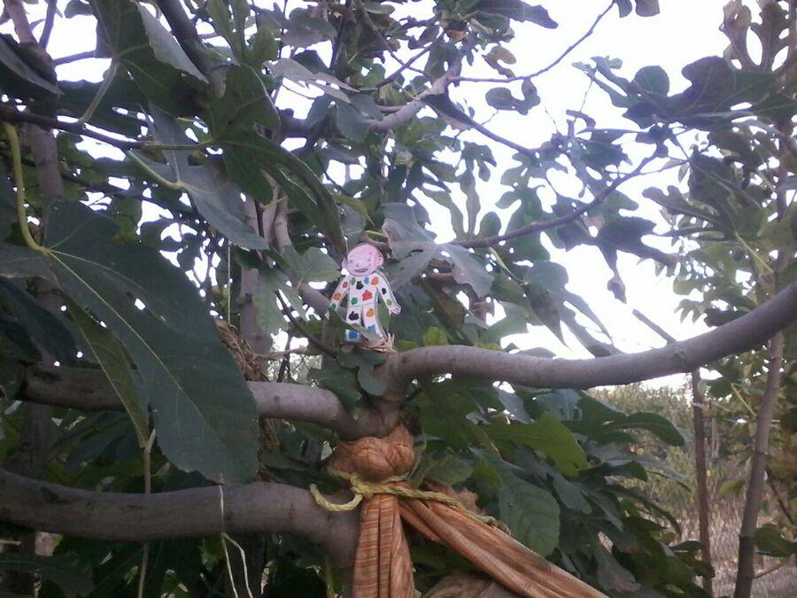 Reconnaissez-vous les arbres dans lesquels Gabin a grimpé à l'aide d'Elie ?