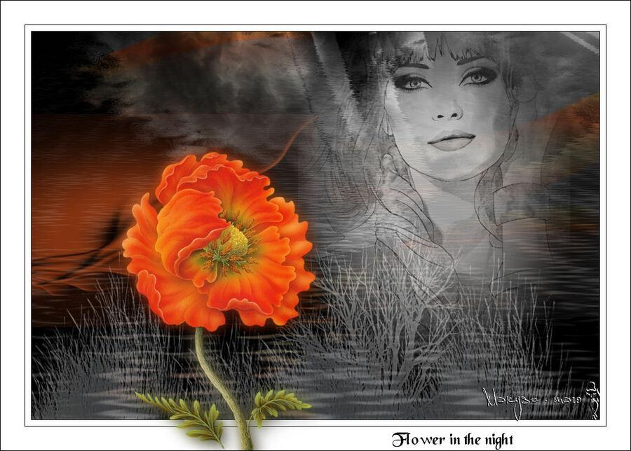 Fleur dans la nuit