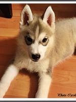 Nouchka (2 mois)