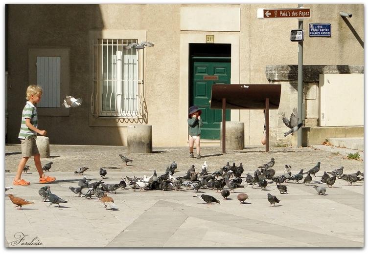 Pourquoi s'en prendre aux pigeons ?