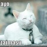 Meme : J'adore la tête du chat ! Ohayo gozaimasu ! Ogenki desu ka ?