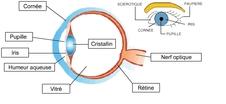4-L'oeil, ses défauts et ses corrections