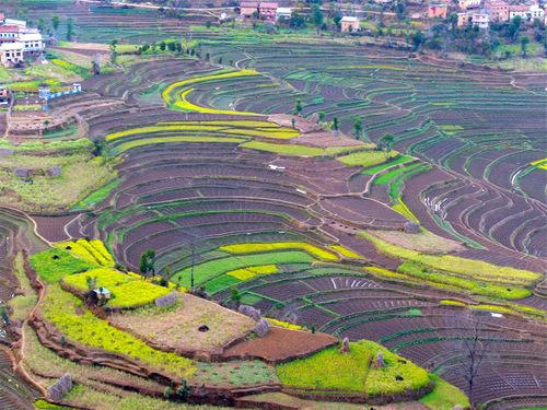 de superbes rizières en terrasses;