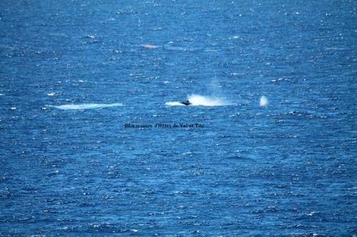Enfin on a vu des baleines à la pointe des châteaux