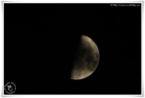Dame la Lune cette nuit