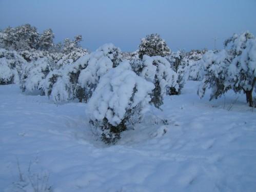 neige-fevrier--48-.JPG
