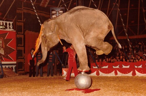 Daniel Suskow et les éléphants du cirque Jean Richard version années 80