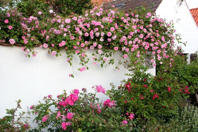 Kiss me over the garden wall